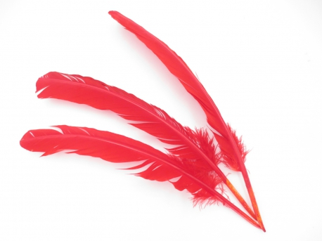 White Sage Smudge Feather red (3 pieces) - wholesale