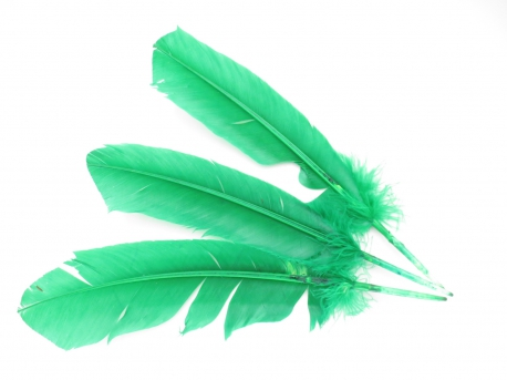 White Sage Smudge Feather green (3 pieces) - wholesale