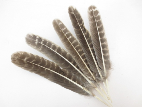 White Sage Smudge Feather Wholesale